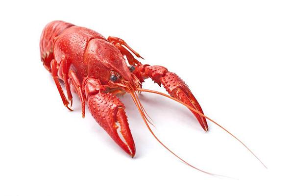 漫天香手抓小龙虾加盟费多少钱