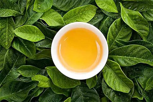 八马茶叶加盟条件