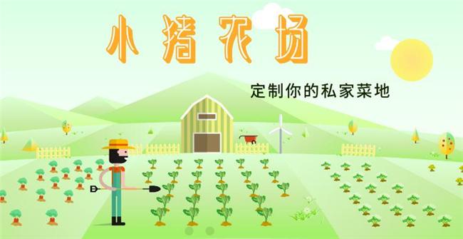 小猪农场加盟.jpg