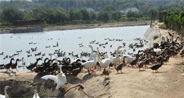 汉江畜禽养殖加盟